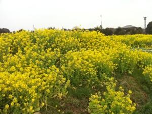 2011_04_03_15_34_37_ip085