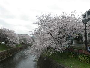 2011_04_10_11_26_52_wp004